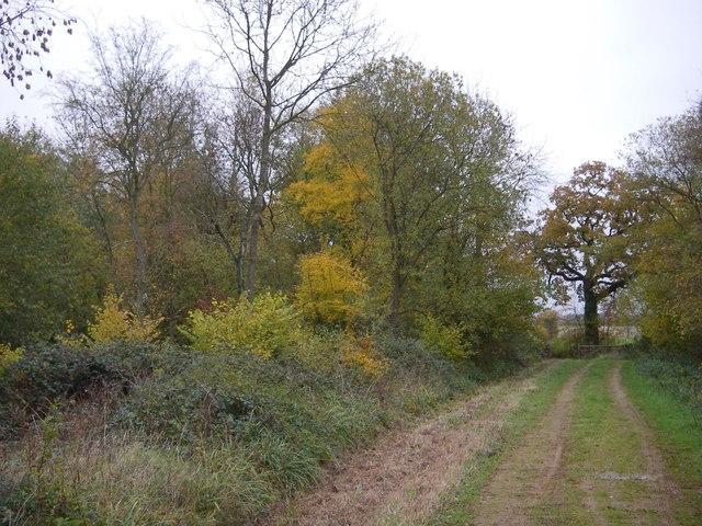 Main ride - Hempstead wood
