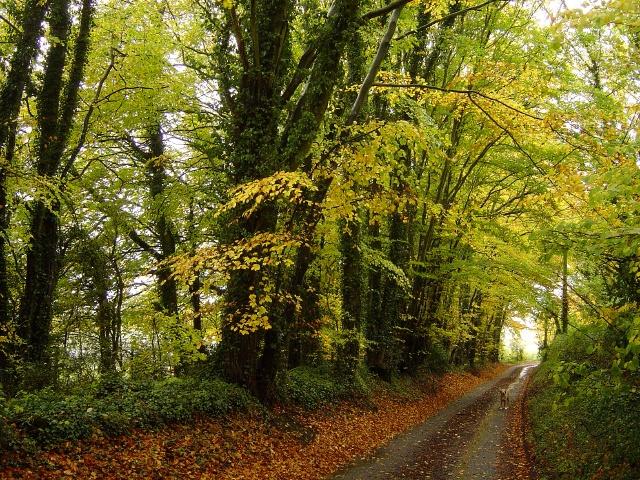 Pickaxe Lane, South Warnborough