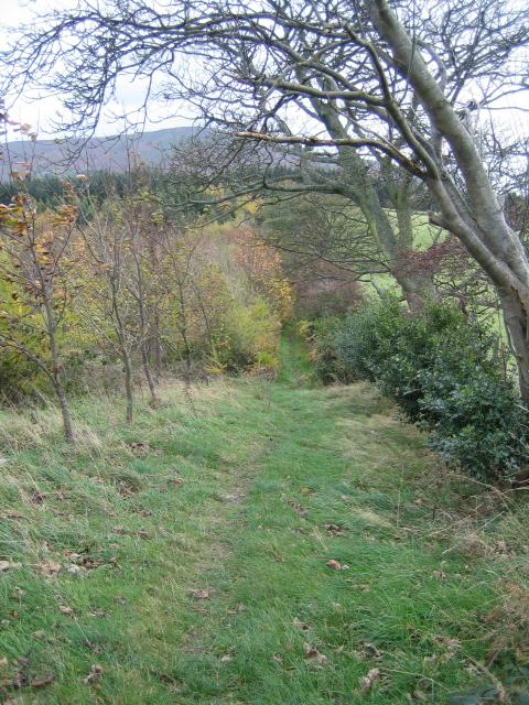 Offa's Dyke path coming down off Cefn Du