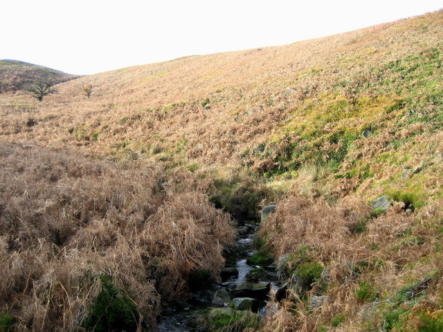 Spruce Gill Beck