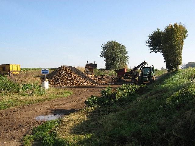 Transferring Sugar Beet