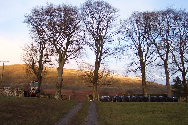 Winter trees at Simonstone