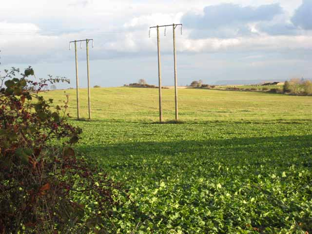 Field near Dalton Piercy