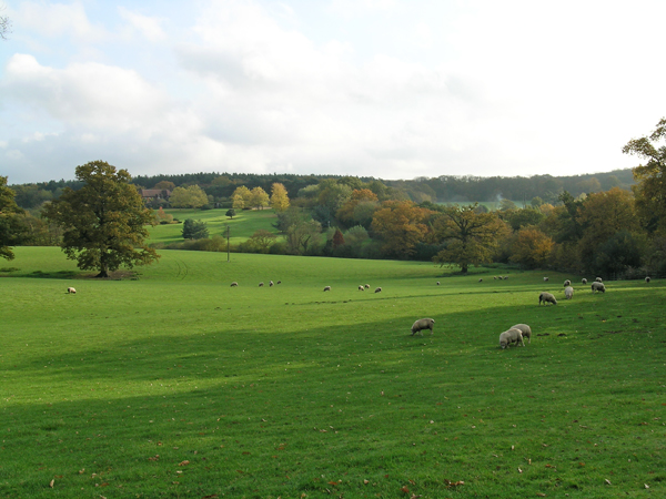 Sheep and countryside on Gaynes Park Estate