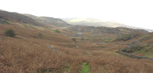Bracken infested hillside