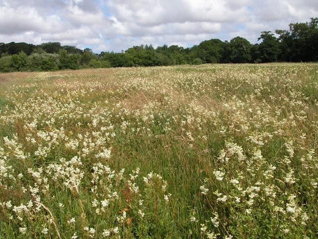 Wetland near Mannington Hall