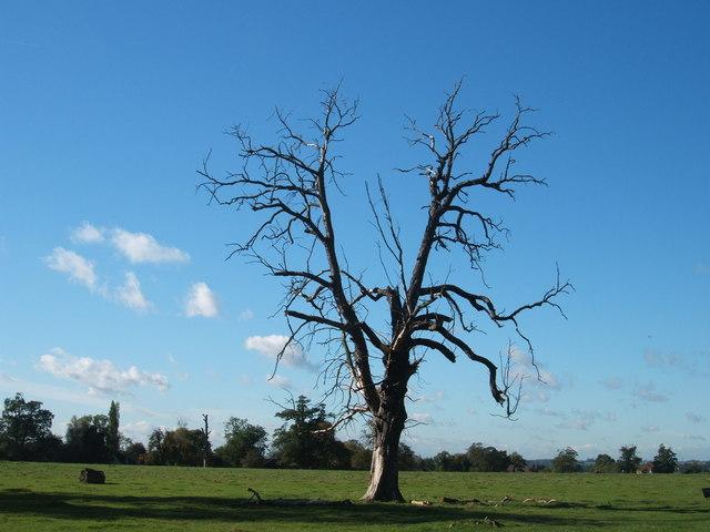 Woodside Green, National Trust, near Hatfield Forest