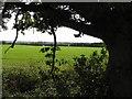 TL1165 : Fields by Andrew Tatlow
