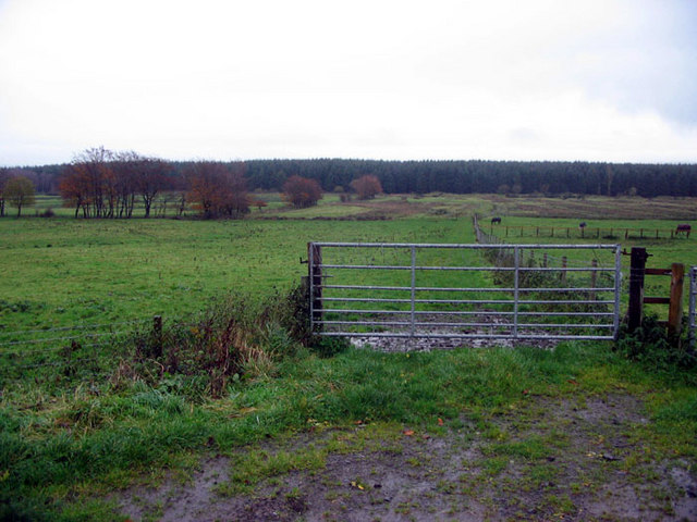 Pastureland and forestry