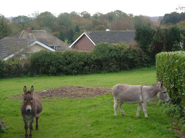 Brixton donkeys
