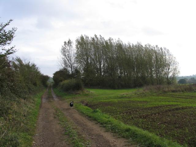 Roman Road towards Corby