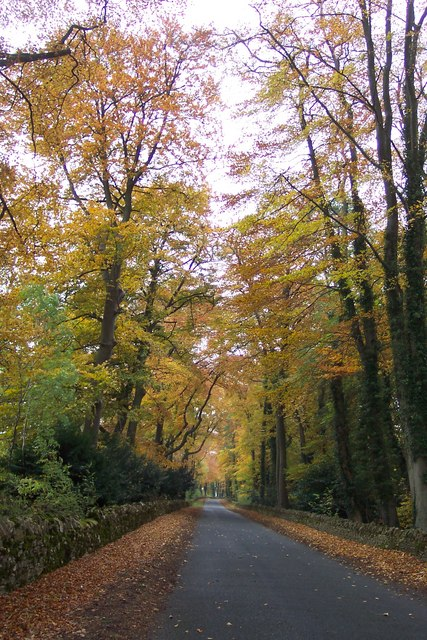 Beech lane in Autumn.