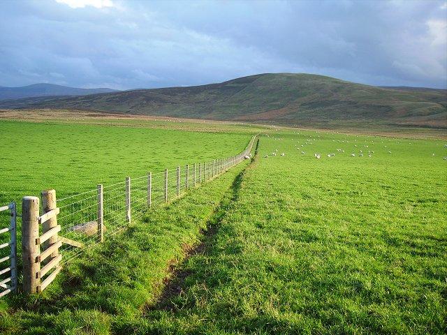 Fallside's fields