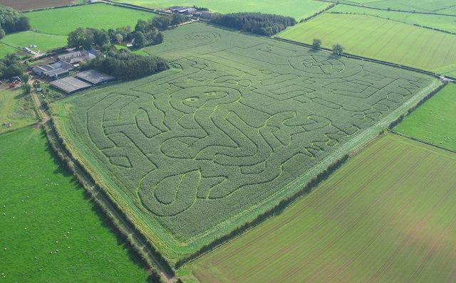 Hay Close Farm Maize Maze