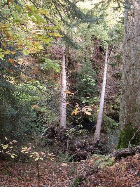 Fallen trees near Aira Force, Watermillock township, Matterdale