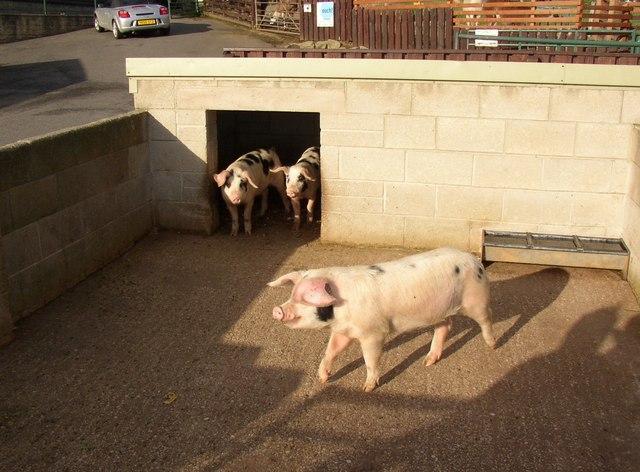 Pigsty at Ponderosa, Norristhorpe, Liversedge