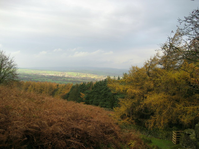 Top edge of Heber's Ghyll Woods