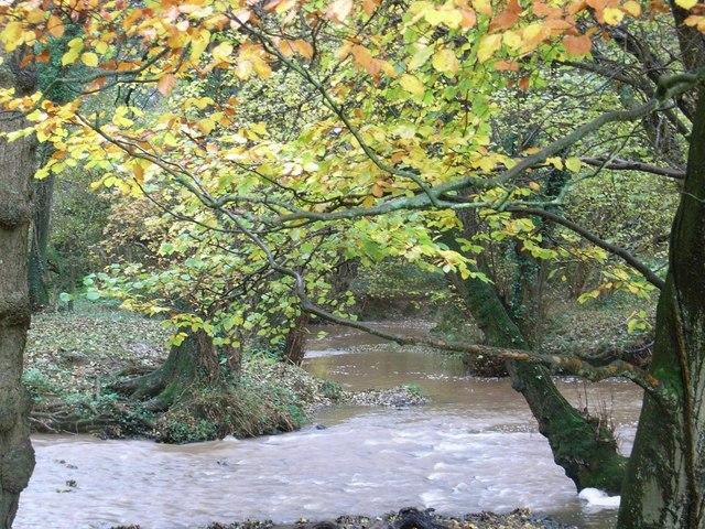 A swollen Berthin Brook (II)