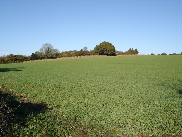 Farmland at Martin Drove End