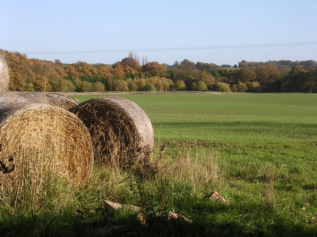 Bales and woods
