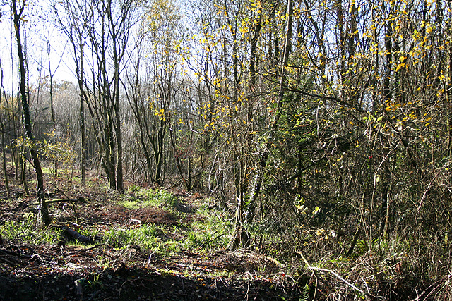 Staple Fitzpaine: Staple Park Wood
