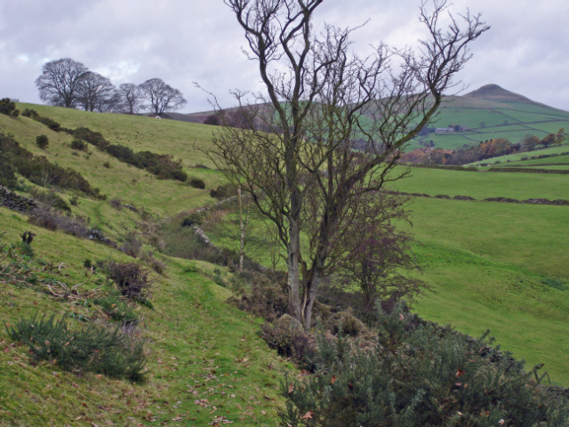 Wincle - footpath to Allmeadows