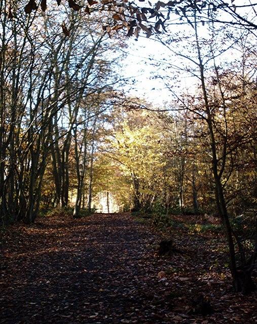 Bridleway, Beaches Wood