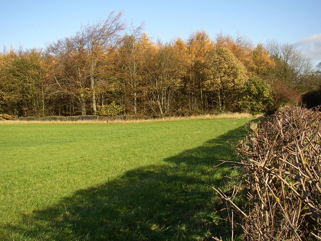 Edge of Bullcliff Wood, West Bretton