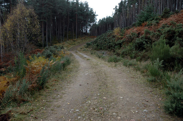 Forestry Track north of Strathpeffer