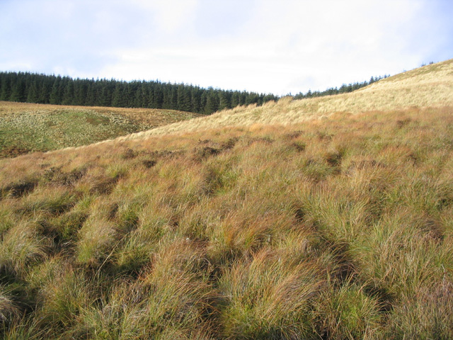 Rough hill grazing in The Cheviots