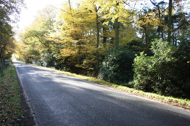 Autumn on Southern Lane