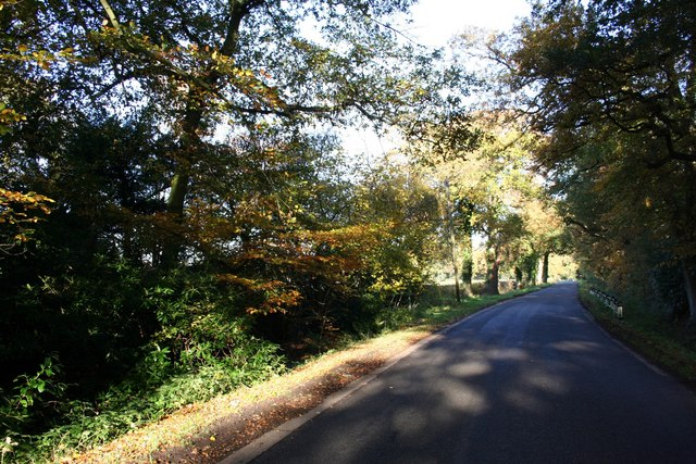 Autumnal scene on Southern Lane