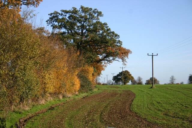 Field margin, Little Saxham