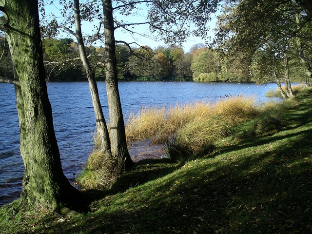 Wollaton Park Lake