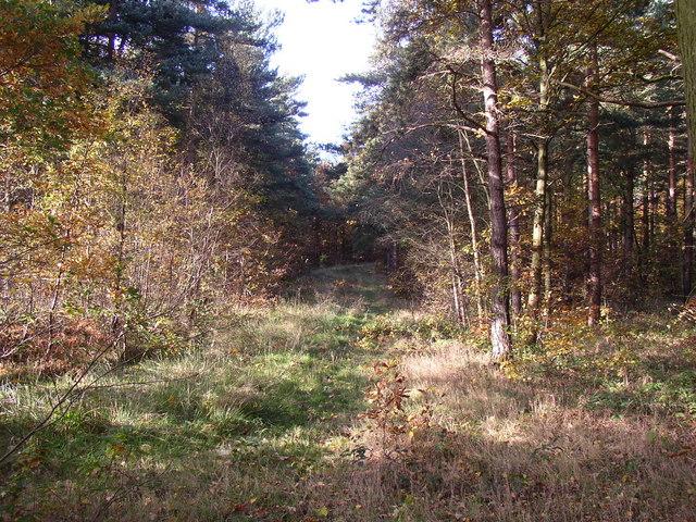 Footpath in Bullcliff Wood, West Bretton CP