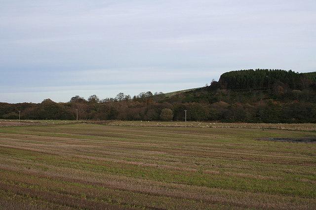 Looking towards Hillhead Wood.