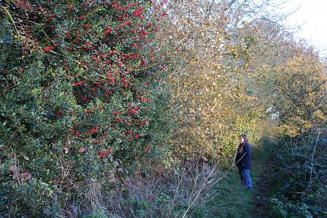 Holly on Bridleway