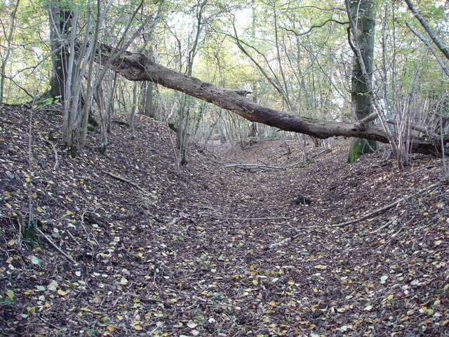 Bank and ditch on Ancient Fort in Mistleberry Woods