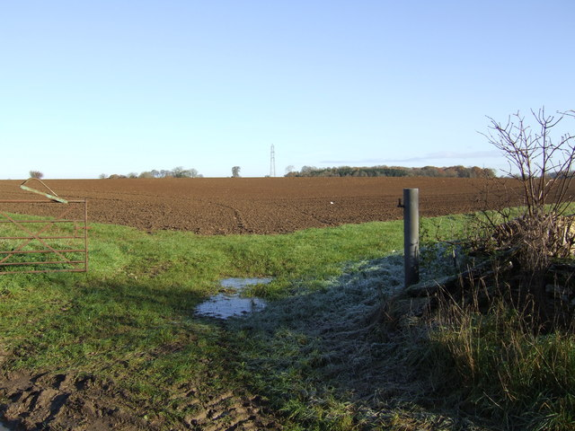 Field from Withy Bed