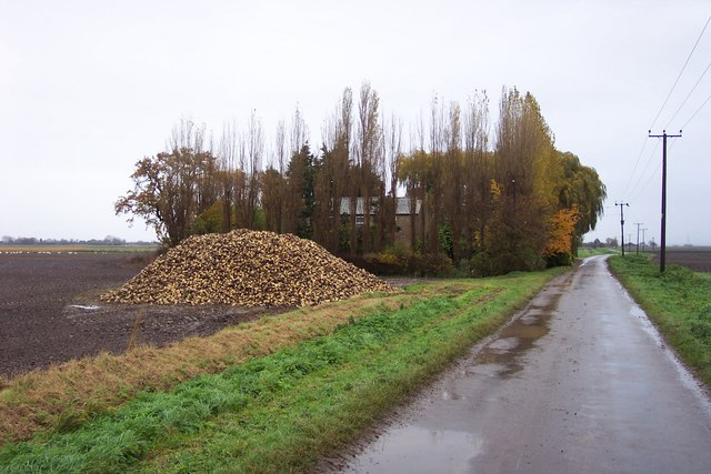 Pile of sugar beet by Willow Farm, Lakesend.