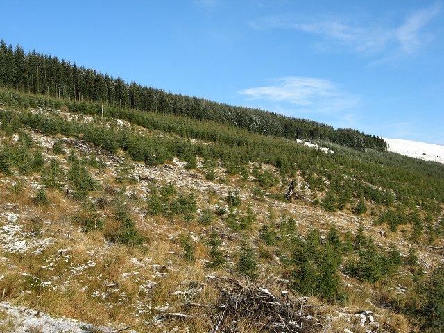 Boreland Forest