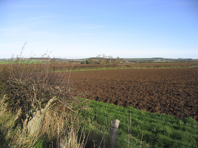 Arable fields at Thornton