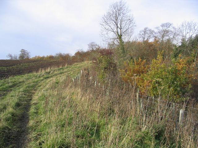 Field and woodland boundary