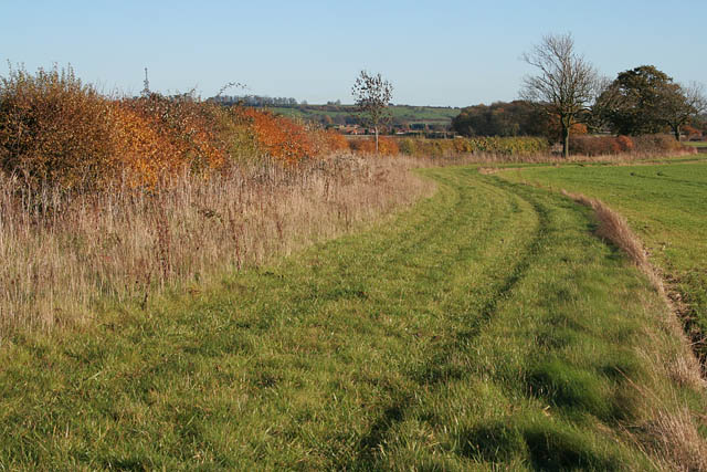 Autumn hedgerow