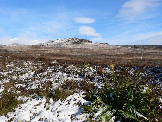 Bracken and snow