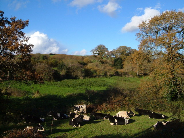 Bovine inactivity at Harraton