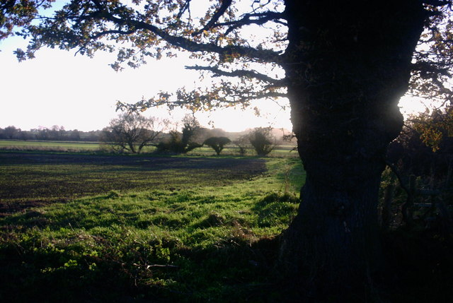 Fields, Hedges and Trees