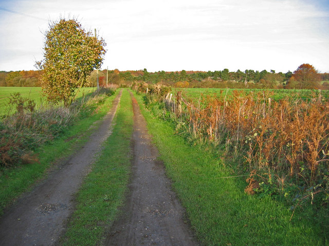 Track to Cockmoor Cottage