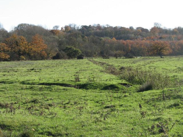Standlynch Meadows