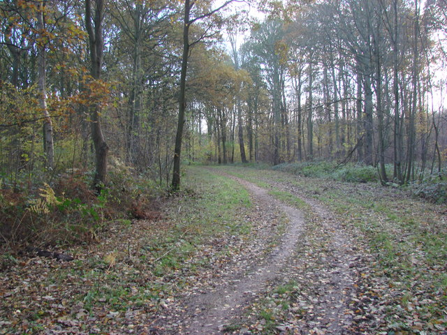 Track in West Hagg Plain Woods